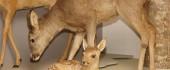 Vignette pour un objet LOM Les animaux de la forêt