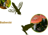 Preview image for LOM object Biodiversité