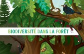 Preview image for LOM object Biodiversité dans la forêt