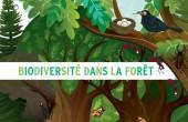 Preview image for LOM object Biodiversité dans la forêt