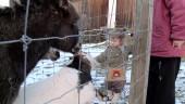 """Preview image for LOM object Les possibilités d`apprentissage chez les enfants de moins de 4 ans, le film """"Animaux"""""""
