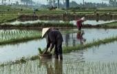 Preview image for LOM object Reis für alle: Laos auf dem Weg zum Selbstversorger