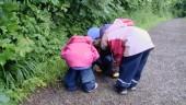 """Preview image for LOM object Les possibilités d`apprentissage chez les enfants de moins de 4 ans, le film """"Sur le chemin"""""""