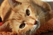 Preview image for LOM object Entdecke die Haustiere. Die kleine Tierfibel