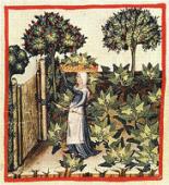 Vignette pour un objet LOM Education nutritionnelle : les herbes aromatiques, les épices et le groupe vert